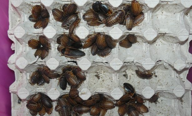 Aktuální nabídka krmného hmyzu